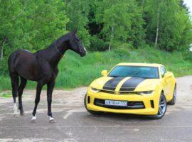 лошадиная сила в Квт